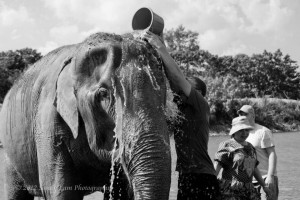 Playing with Giants: My Day at the Elephant Nature Park