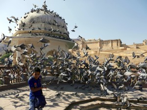 Colors of Rajasthan: Six Highlights in Jaipur