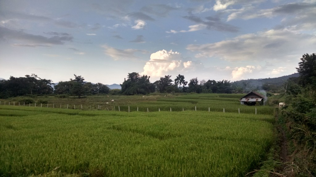 Relaxing in the rice fields of Pai, Thailand