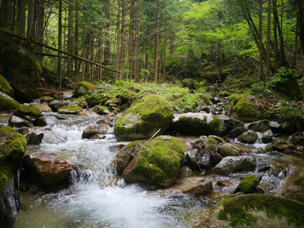 A stream makes its way through the forest along a portion of the Nakasendo.