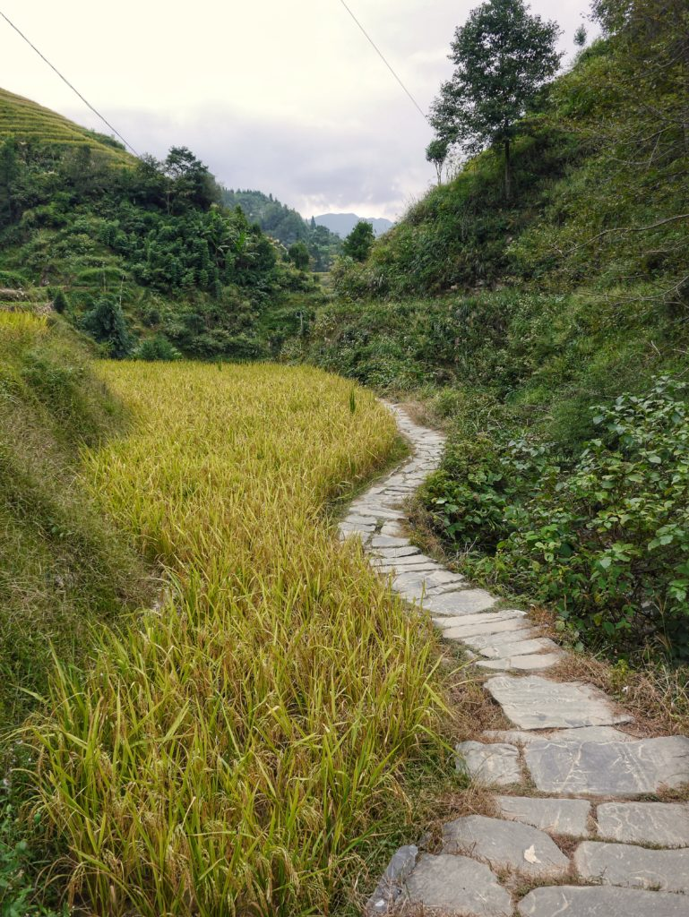 Path through the Rice Terraces